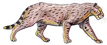 Dinofelis15DB.jpg