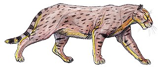 <i>Dinofelis</i> extinct genus of mammals