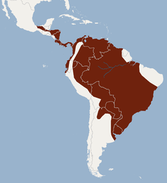 Distribution of Myotis albescens.png