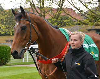 Dodging Bullets British-bred Thoroughbred racehorse