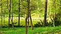Dolina Marzeń, wiosna.jpg