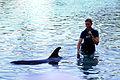Dolphin Cove 33.jpg