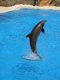Les Catégories de dauphins dans DAUPHIN