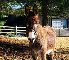 Donkey-08.jpg