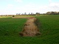 Drain, Rother Levels - geograph.org.uk - 388358.jpg
