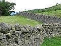 Dry stone wall - geograph.org.uk - 195393.jpg