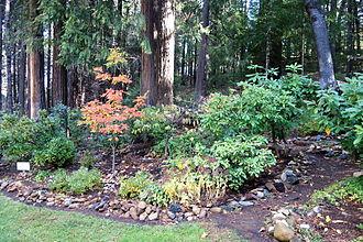 Dunsmuir Botanical Gardens - Dunsmuir Botanical Gardens