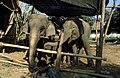 Dunst Myanmar 2005 04.jpg