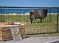 EE-37 - Tallinn - Sign - Sheep - Sad - Happy - Chordata (4890771909).jpg