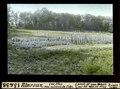 ETH-BIB-Illarsaz, Les Iles neu cultivierte Ecke-Dia 247-13438.tif