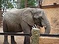 Elefante en el Zoologico - panoramio.jpg