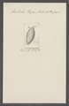 Enchelis pupa - - Print - Iconographia Zoologica - Special Collections University of Amsterdam - UBAINV0274 113 13 0021.tif