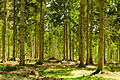 England - English Summer Forest (7183018142).jpg