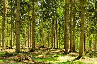 320px-England_-_English_Summer_Forest_%287183018142%29.jpg