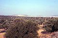 Entre Athènes et Spata - 9 (juillet 1999).jpg