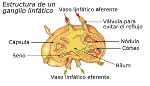 inflamacion ganglio linfatico: