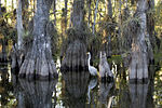 Everglades National Park cypress.jpg