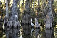 Everglades National Park cypress