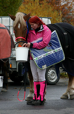 Hevostenhoitaja