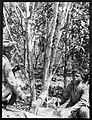 Exhibits from Royal Botanic Gardens, Kew. Wellcome M0001627.jpg