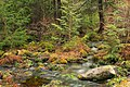 Fall Creek (Revisited) (25) (11659530103).jpg