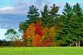 Fall Time - panoramio (1).jpg
