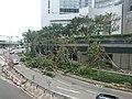 Fallen Trees on Finance Street after Typhoon Mangkhut.jpg