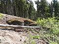 Felsen in der Dehl (Hoch-Weisel) 06.JPG