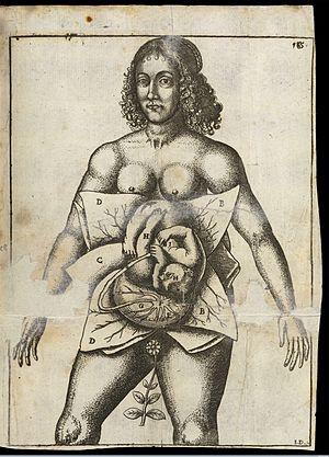 Jane Sharp - Jane Sharp's depiction of women in utero