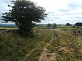Field lane and dilapidated farm - geograph.org.uk - 1449466.jpg