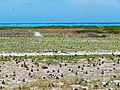 Figure 46- Eastern Island Runways (Property No. 12-30), Midway Atoll, Eastern Island (April 16, 2015) (25494205173).jpg