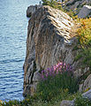 Fireweed by rock face Emigrant Lake.jpg