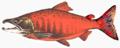 Fish stub (Sockeye).png