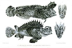 Fishes1Mitchell1850.jpg