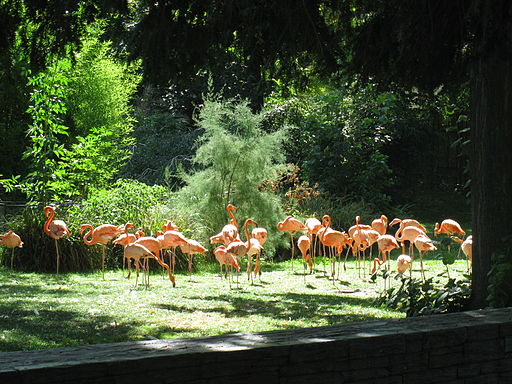 Flamants2