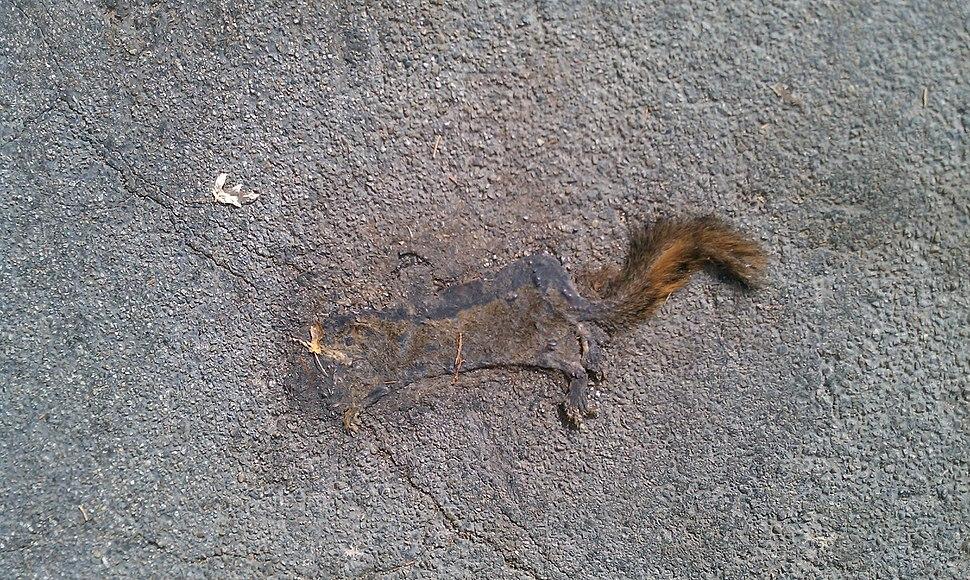 FlatSquirrel