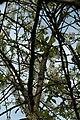Fleur cerisier 06.jpg