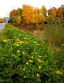 Flickr - Per Ola Wiberg ~ mostly away - Summer and autumn.jpg