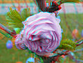 Flickr - jimf0390 - JimF 04-19-10-0006a blossom.jpg