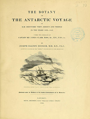 Flora of Lord Auckland and Campbell's Islands - Image: Flora Antarctica title page