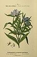 Flore coloriée de poche du littoral méditerranéen de Gênes à Barcelone y compris la Corse (6244465124).jpg