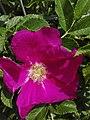 Flower-Dortmund 5.jpg