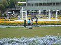 Flower-center134622.jpg