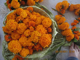 Tihar (festival) - Garlands of marigolds being prepared for the decoration. Houses, offices and commercial complexes are decorated with garlands in the morning of Laxmi Puja.