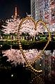 Flower viewing event in Tokyo, Japan; April 2014 (02).jpg