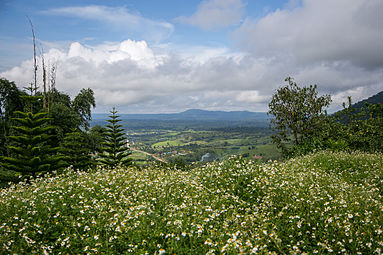 Flowers field and the view.jpg