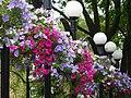 Flowers outside the Camden Head - geograph.org.uk - 1428890.jpg