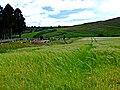 Fodderty Cemetery - geograph.org.uk - 208060.jpg
