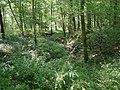 Forêt de Mormal - Nerviens 01.jpg