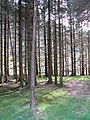 Forest, Glen Massan - geograph.org.uk - 422311.jpg